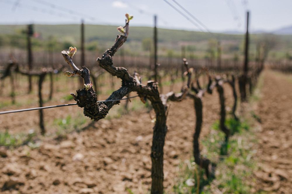 Spring Wine Festival at a Vintage Vineyard